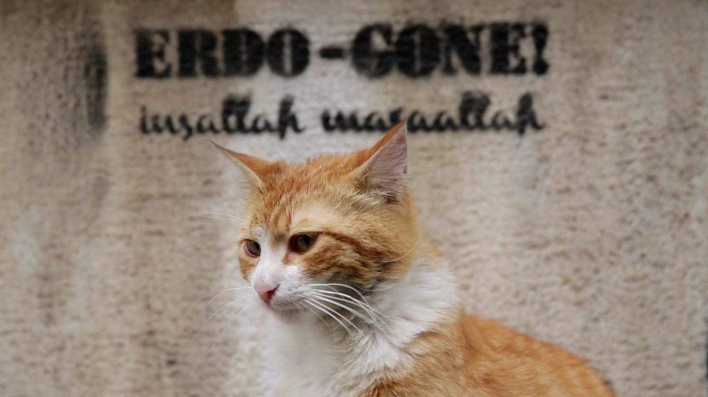 kedi-gato-estambul-1440x808